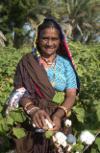 Cottonproducer