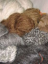 Natural_walnut_dyed_handspun_2yarn